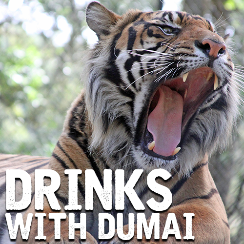 Drinks with Dumai the Tiger | After Hours Event - Wildlife Safari
